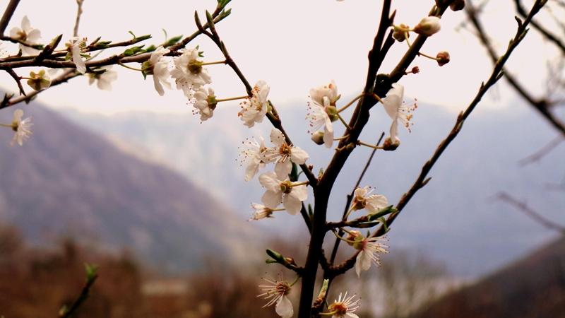 Оздоровительный тур в Черногорию