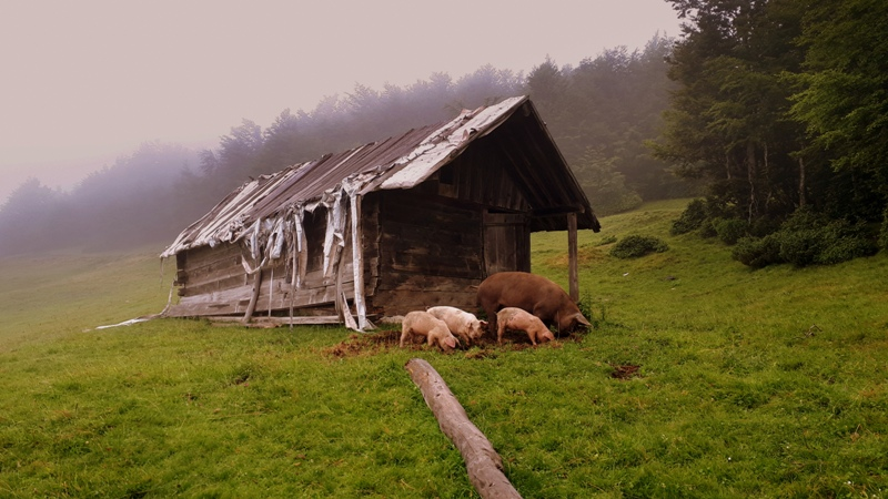 перезагрузка тур Черногория 4 день