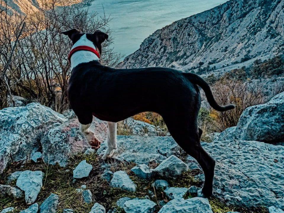 Gucci Dog Hiking